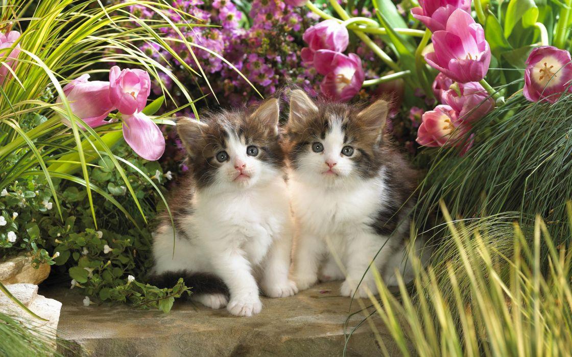 animals cats babies felines kittens cute garden flowers nature plants fur face eyes whiskers cute wallpaper