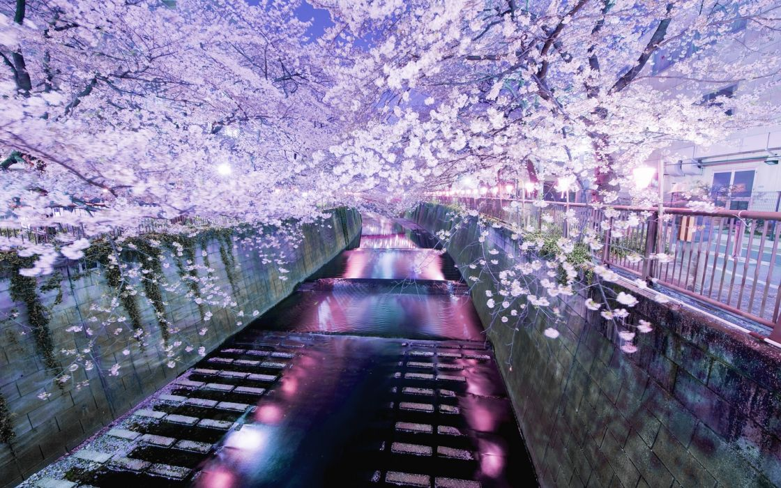 japan asian oriental canal water waterway waterfalls reflection color trees blossoms flowers night lights soft garden path sidewalk buildings purple shine photography hdr fence leaves wallpaper