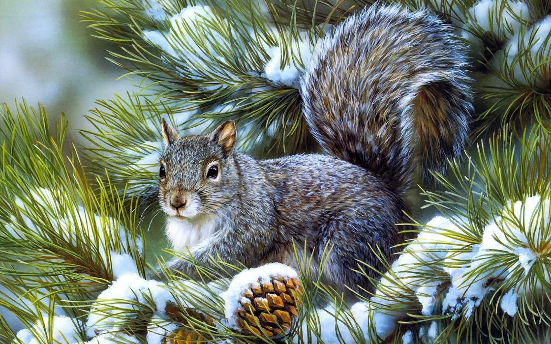 Squirrels animals rodents art artistic nature wildlife winter snow seasons trees branch limb fir pine face eyes whiskers wallpaper