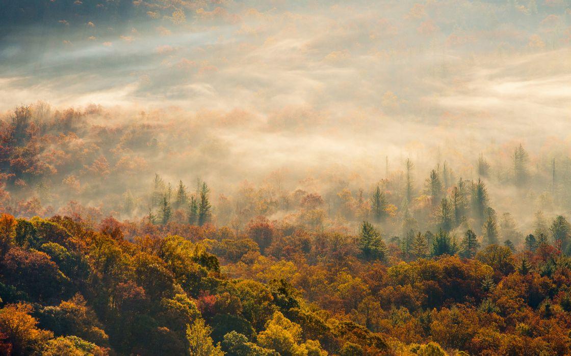 nature landscapes hills fog mist haze trees forest color autumn fall seasons scenic sunrise sunset sunlight sun leaves wallpaper