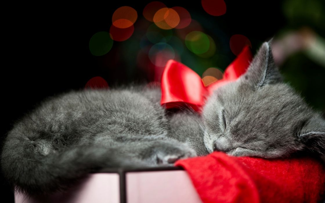 holidays christmas bow red animals cats kittens whiskers sleep cute wallpaper