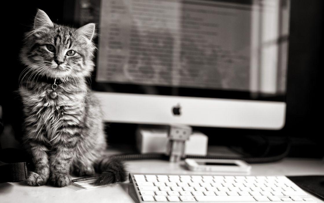 animals cats felines black white tech computer keyboard screen reflection danbo amazon apple fur eyes stare whiskers wallpaper