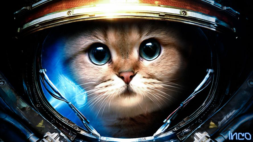 Starcraft sci fi science fiction humor funny astronaut animals cats felines cute face eyes whiskers suit costume broken shatter crack artistic fur outer space wallpaper