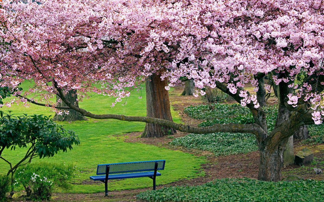 nature landscapes trees flowers blossoms park garden grass spring seasons bench plants color sunlight wallpaper