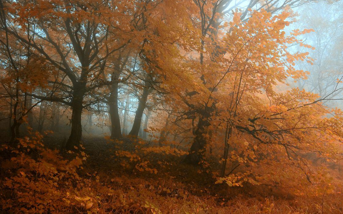nature landscapes trees forests leaves color fog mist haze autumn fall seasons plants grass dew wallpaper