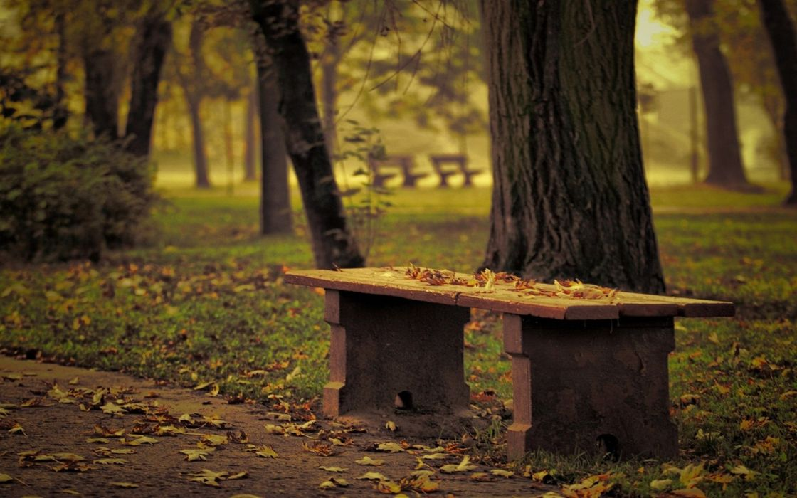 nature landscapes leaves trees park bench path roads garden autumn fall seasons plants mood wallpaper