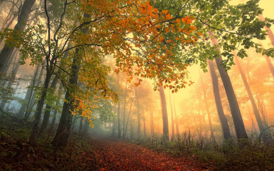 Nature Landscapes Trees Forest Leaves Path Roads Color Autumn Fall Seasons Sunlight Light Fog Haze Mist