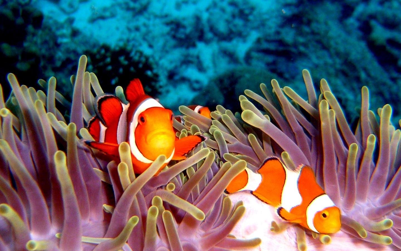 Sea Ocean Fish Fishes Reef Coral Ocean