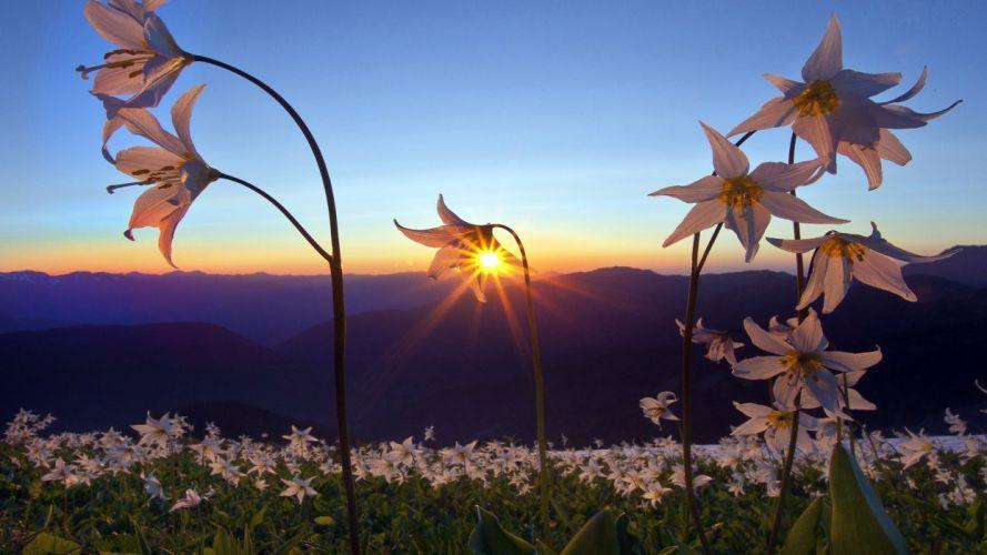 nature landscapes fields flowers plants petals mountains sunset sunrise sun sky color scenic wallpaper