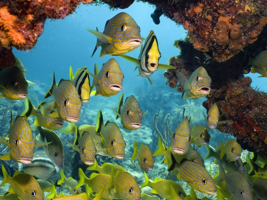 animals fishes tropical underwater water sea ocean life reef coral sand eyes color detail rocks nature wallpaper