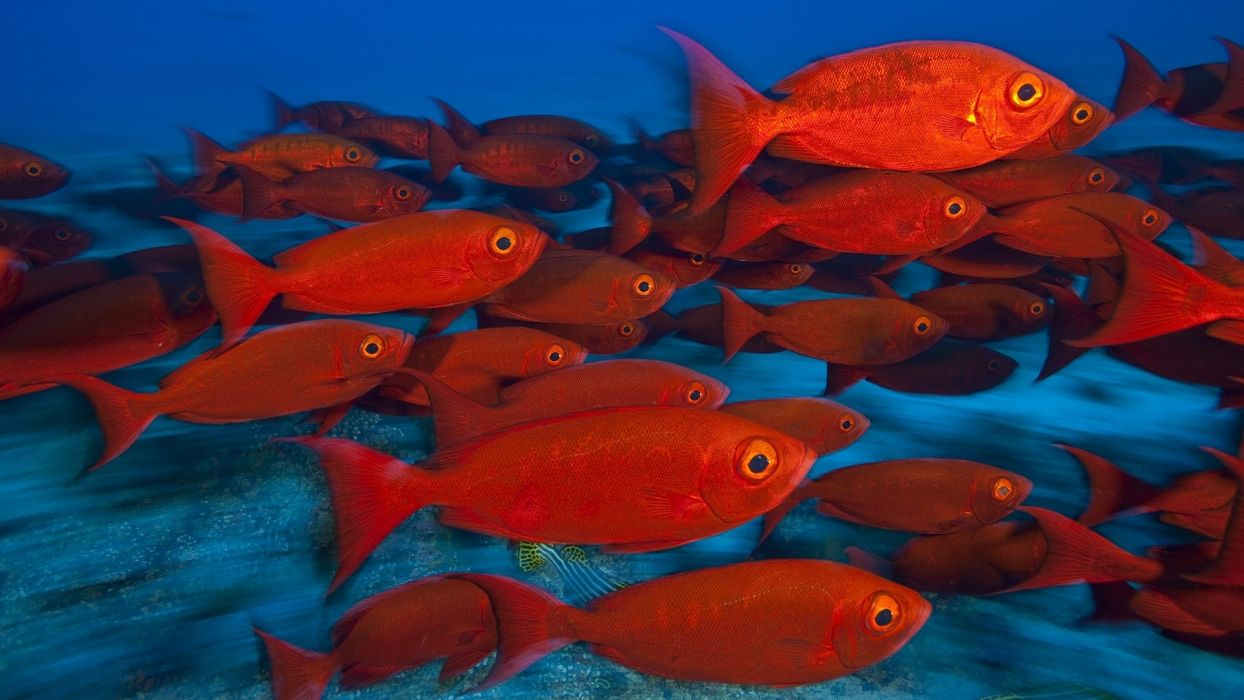 Animals fishes tropical red color eyes underwater sea ocean water ...