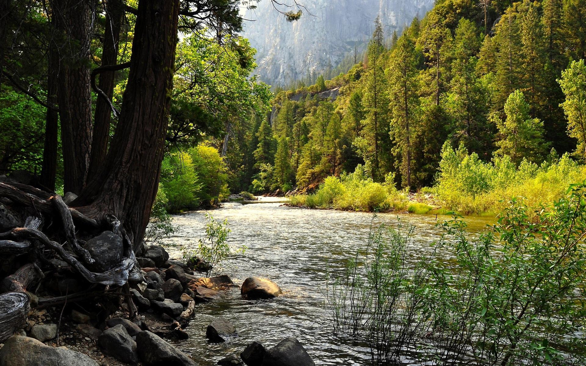 Природа пейзажи реки потоков берег