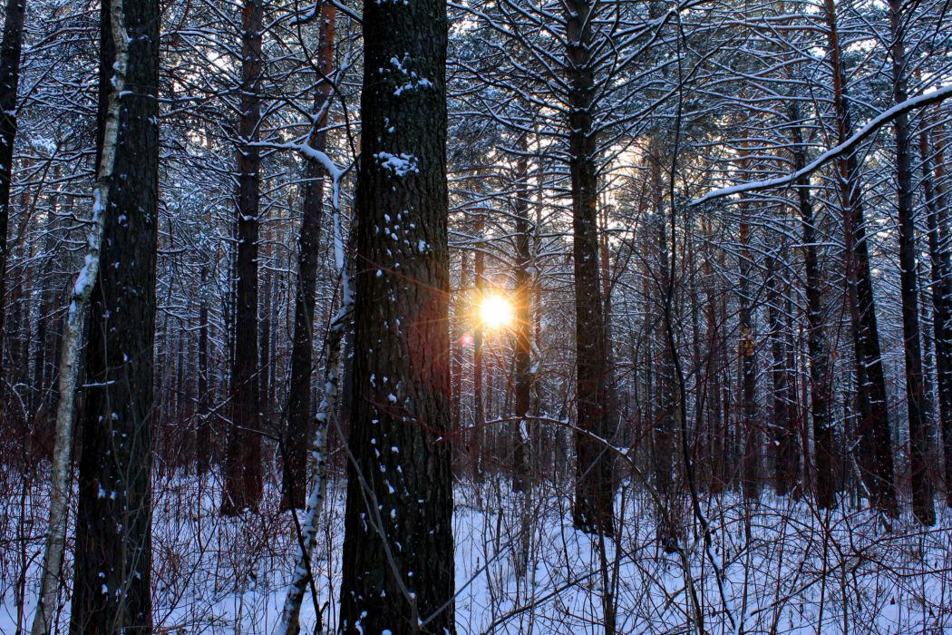 nature landscapes trees forests winter snow seasons sun sunlight sunrise sunset cold wallpaper