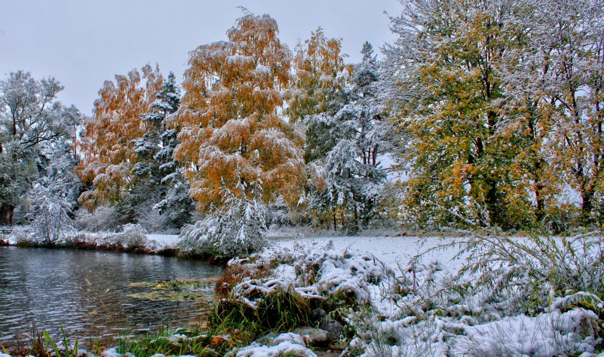 nature landscapes trees forests autumn fall seasons winter snow frost shore lakes grass leaves cold wallpaper