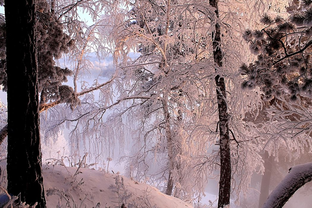 nature landscapes lakes shore trees forest winter snow seasons cold water reflection wallpaper