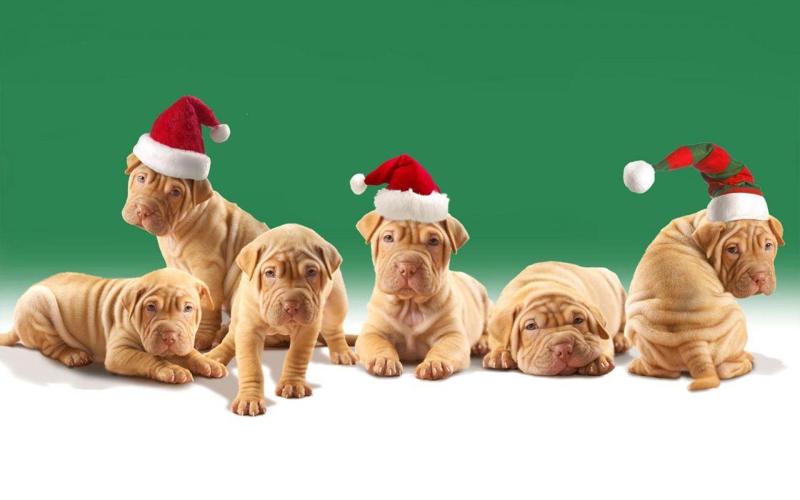 holidays christmas seasonal animals dogs puppy wallpaper