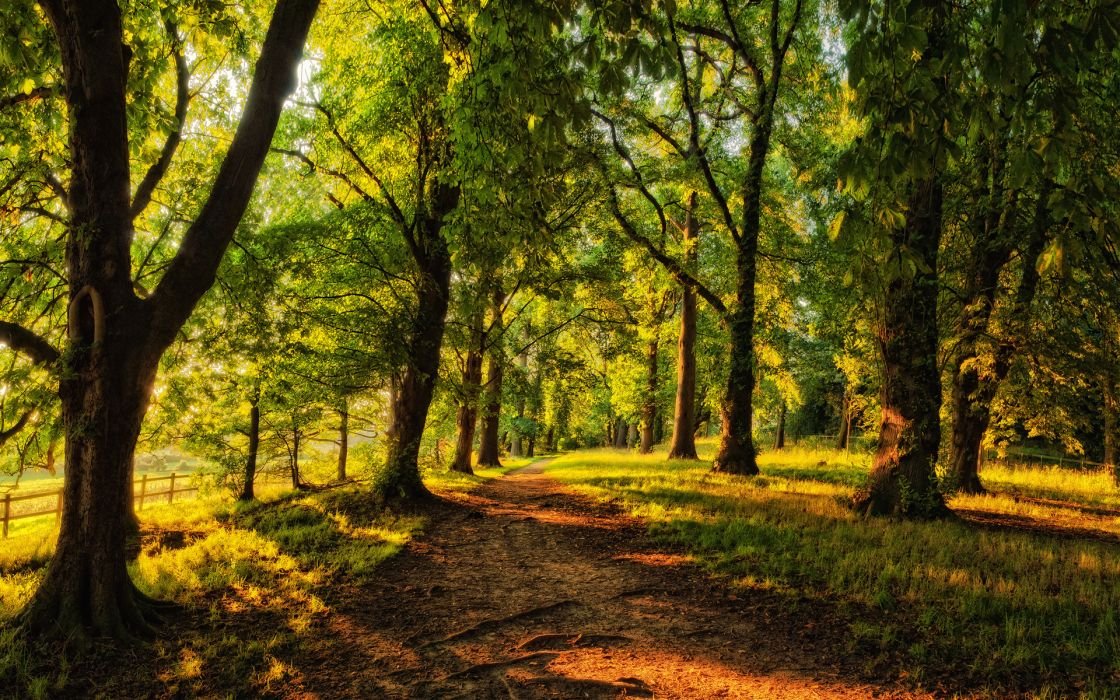 nature landscapes trees forests path roads spring seasons summer sunlight light color fence green wallpaper