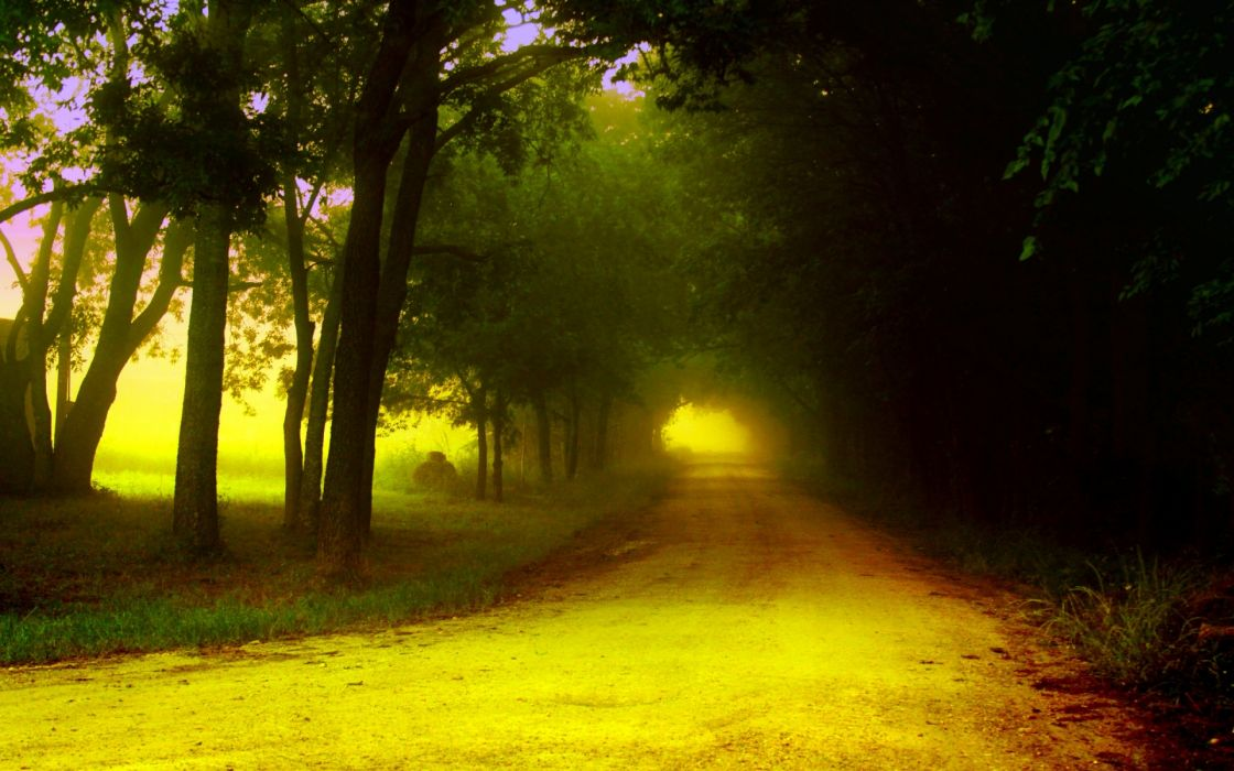 nature landscapes roads trees forest wallpaper