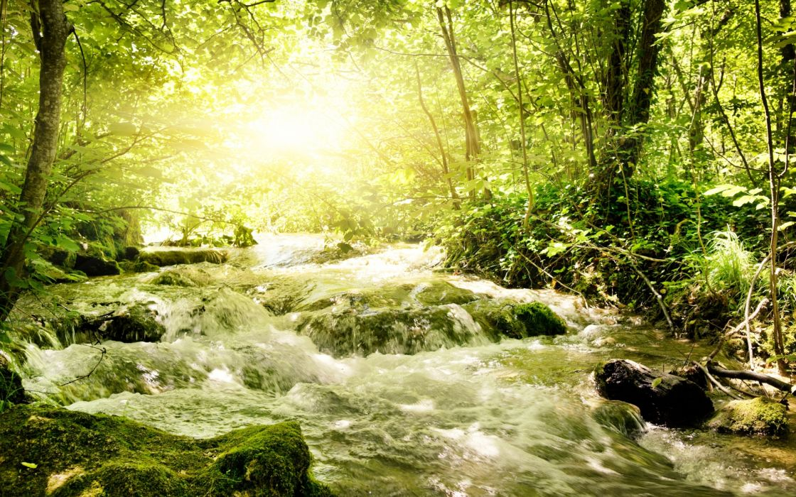 nature landscapes trees forests rivers streams water rapids drops waves rocks bank shore spring summer sunlight sun beam bright green wallpaper