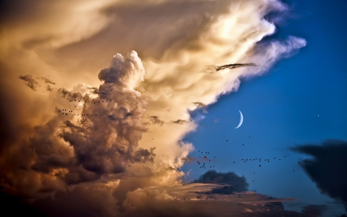 nature sky clouds billow soft thunderhead moon cresent animals birds flock sunset sunrise scenic weather wallpaper