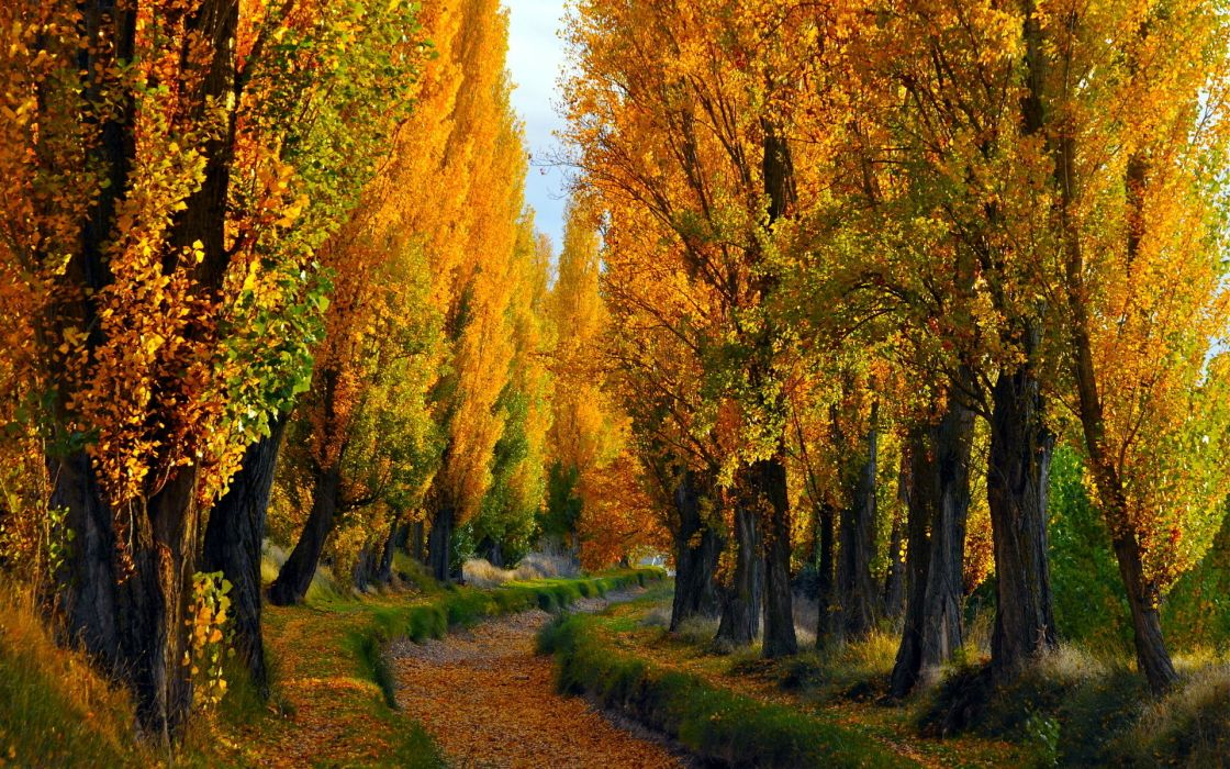 nature landscapes roads track path sunken trees forest autumn fall seasons leaves color bright wallpaper