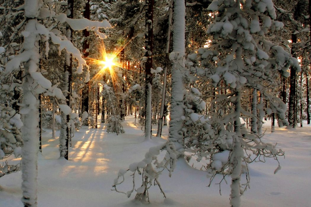 nature landscapes trees fprest winter snow sunlight sunbeam sunrise sunset cold wallpaper