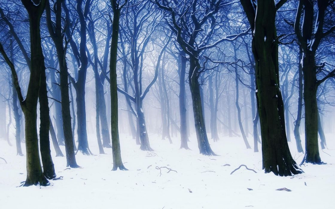 nature landscapes trees forest winter snow seasons white cold haze fog artistic paintings cg digital wallpaper