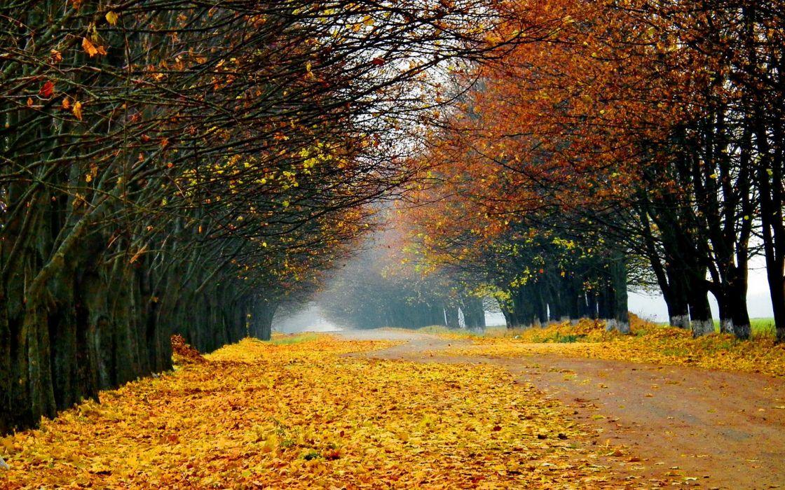 nature landscapes roads street lane path trees leaves autumn fall seasons color fog mist haze wallpaper