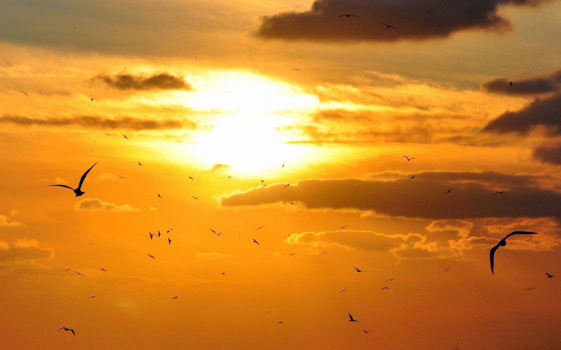Animals Birds Sky Clouds Nature Flight Fly Wings Feathers Sun Sunlight Bright Light Color Wallpaper