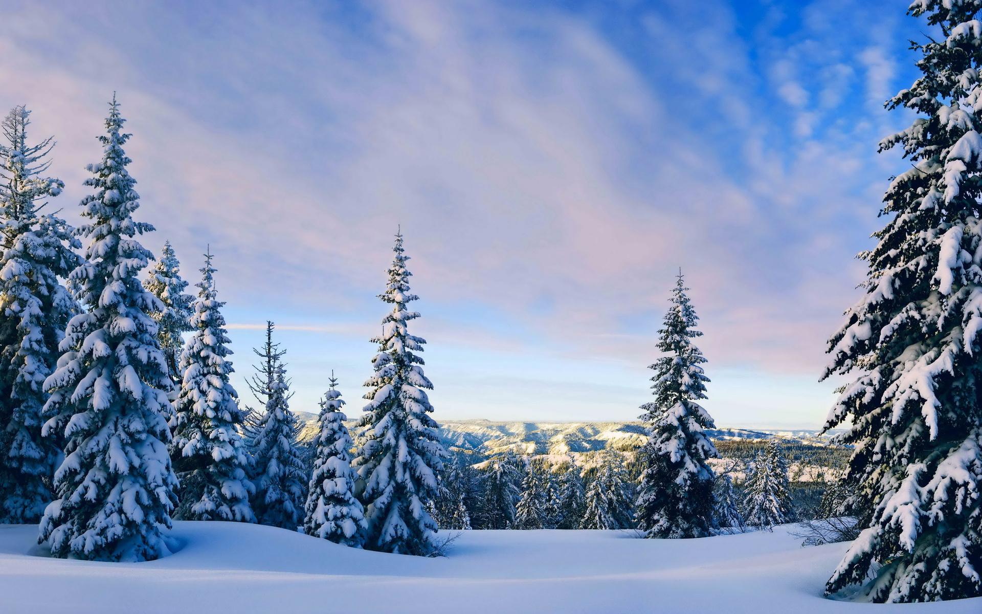 Снег в лесу обои на рабочий стол