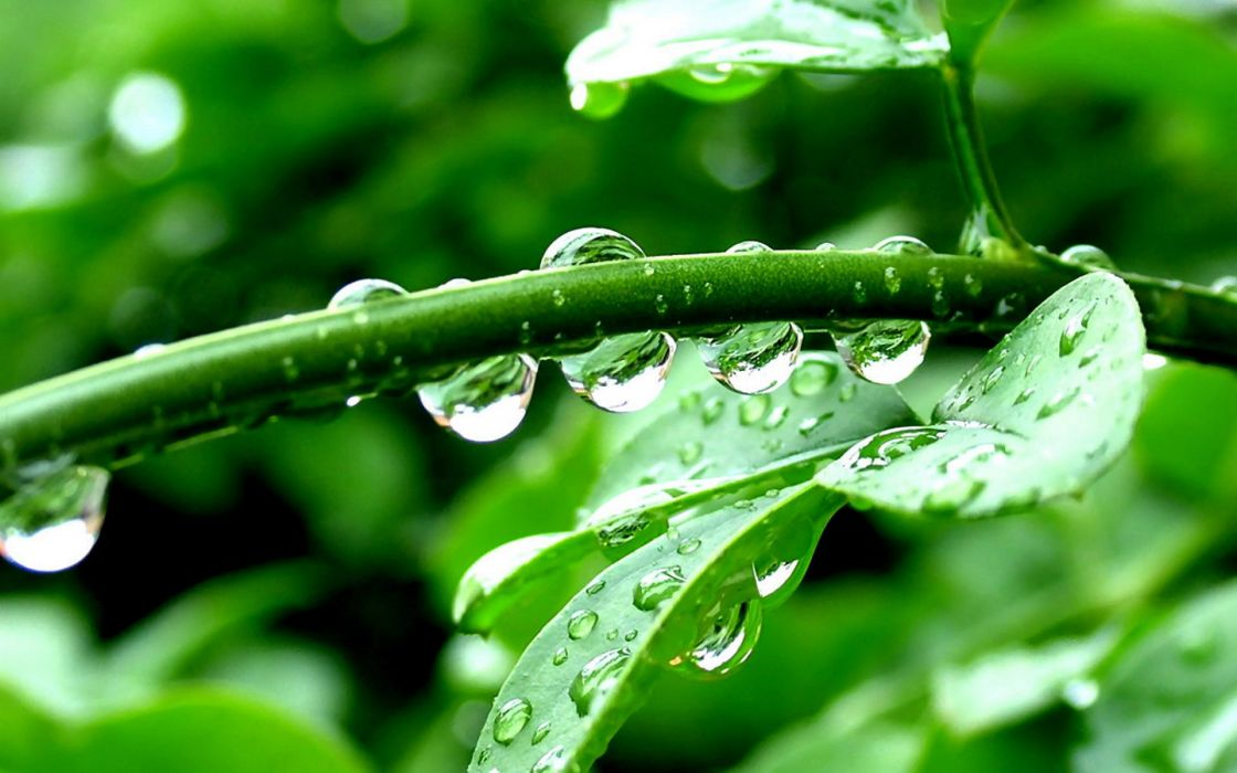 nature plants green leaves water drops sparkle light reflection trees rain storm spring seasons wallpaper