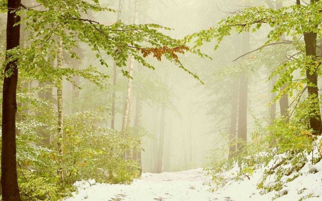 nature landscapes trees forests winter snow seasons fog mist haze wallpaper
