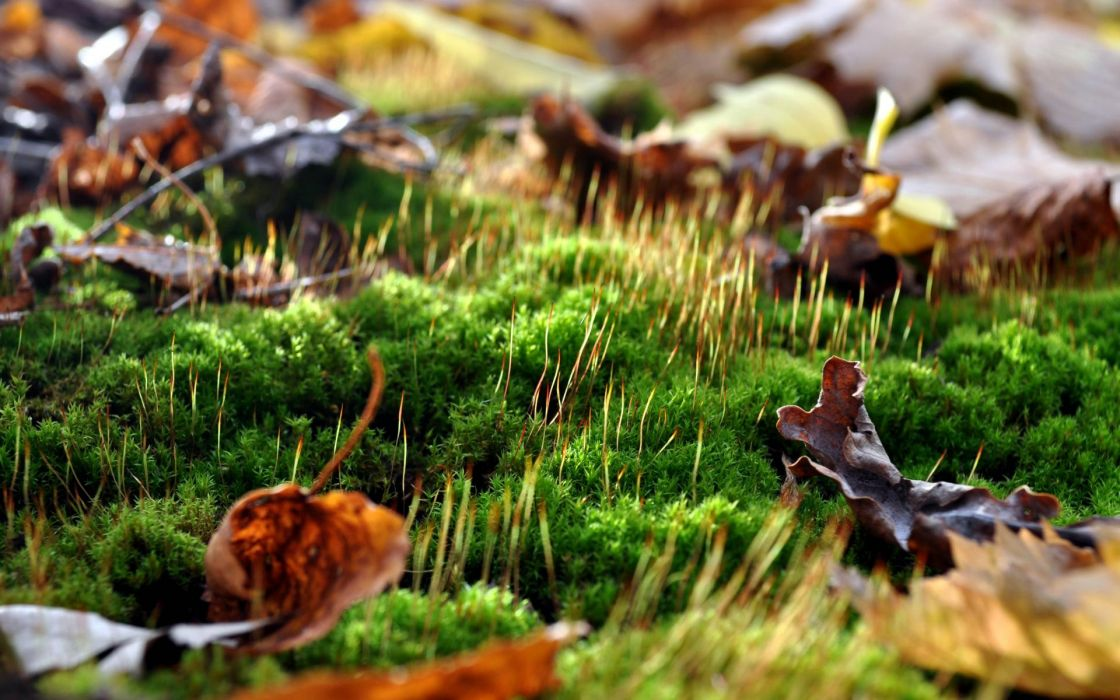 nature landscapes forest moss leaves autumn fall seasons colors wallpaper