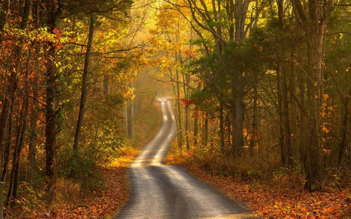 nature landscapes trees forests roads street path leaves fall autumn seasons color wallpaper