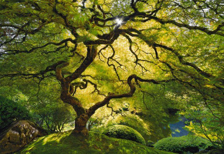 nature landscape trees moss green color sunlight gargen park leaves spring seasons branches olants wallpaper