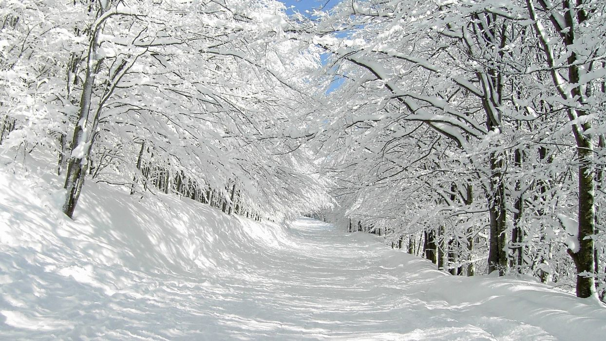 nature landscapes winter snow trees forest white roads path trail track cold wallpaper