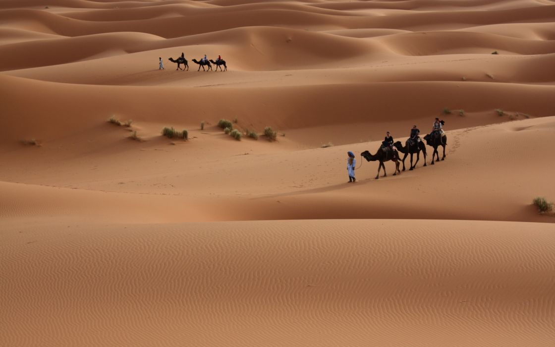 nature landscapes desert dune sand people travel photography plants wallpaper