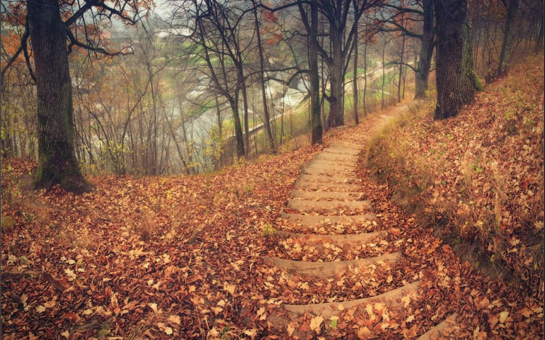 nature landscapes trees forest path stairs tracks roads leaves autumn fall seasons hill wallpaper
