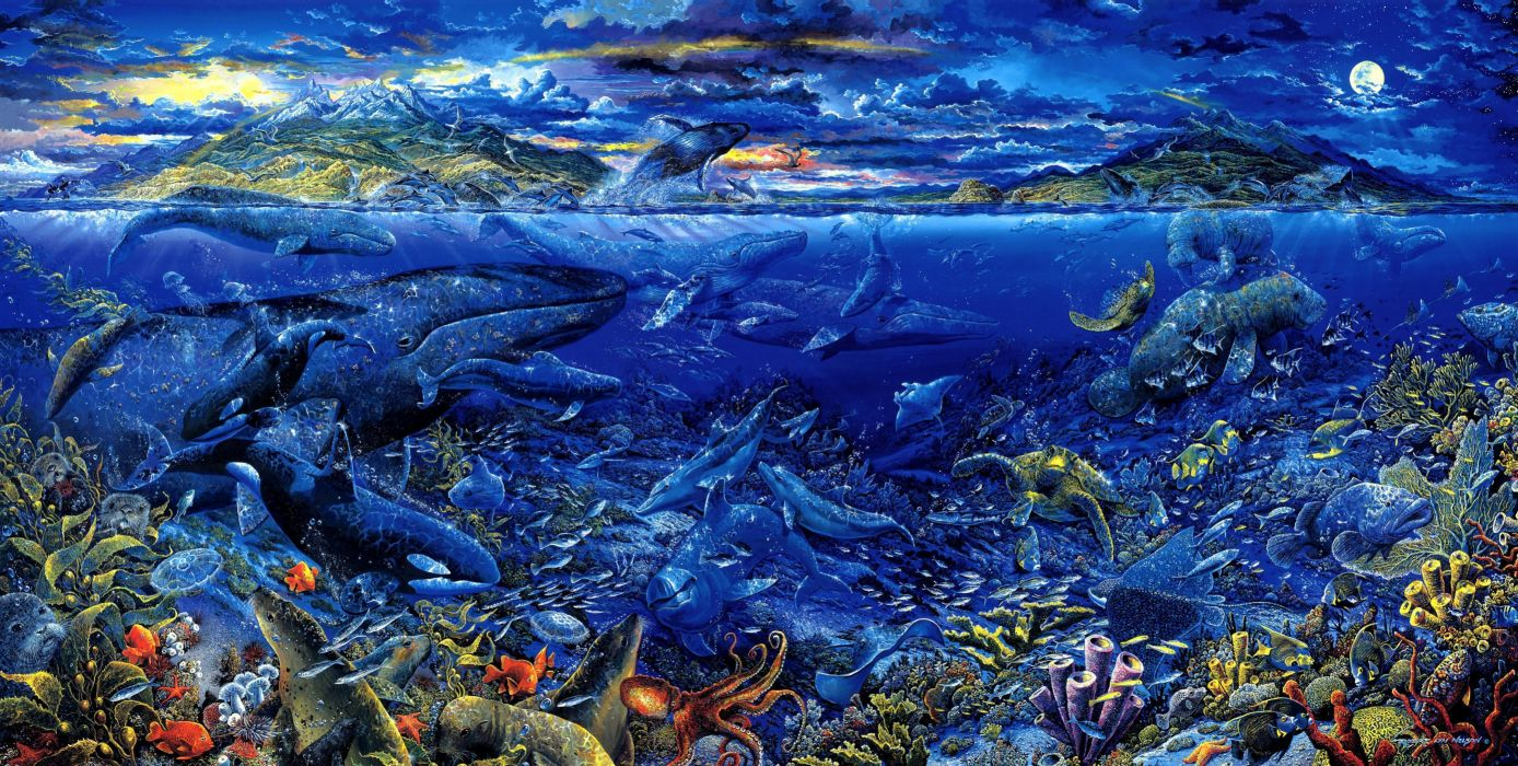 animals fishes whales tropical underwater water sea ocean color detail life coral reef turtle octopus islands seascape landscapes wallpaper