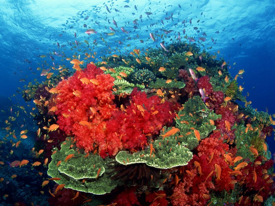 animals fishes tropical underwater reef coral sea ocean color sunlight wallpaper