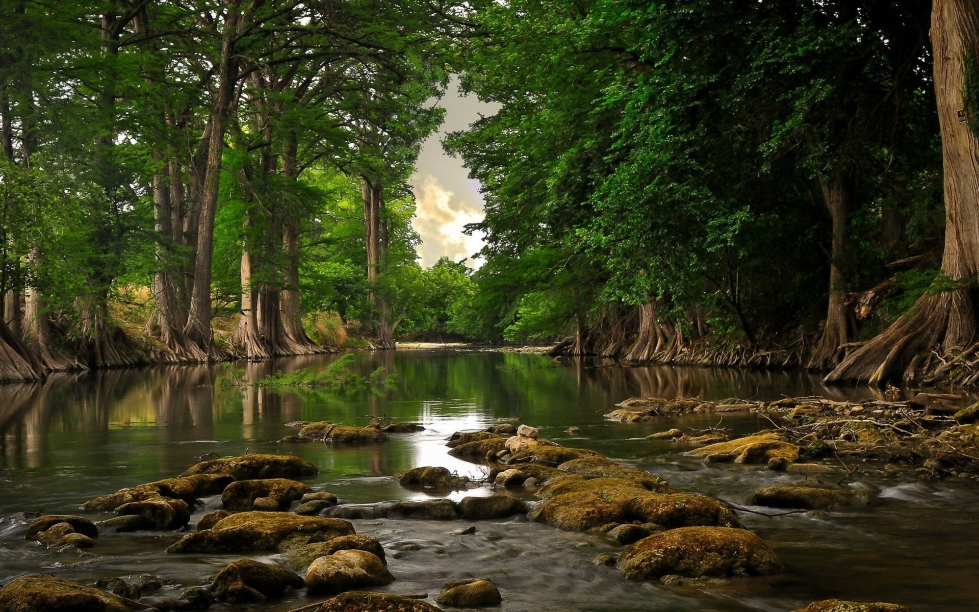 nature landscapes swamp rivers water trees forest jungle reflection HD Wide Wallpaper for Widescreen