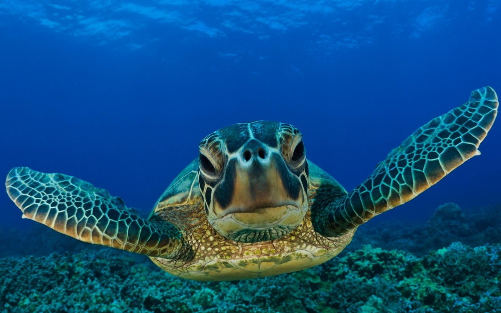 Animals reptiles turtles sea life ocean underwater water swim float
