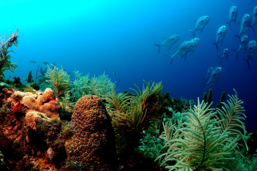Animals fishes underwater reef coral color sea ocean tropical