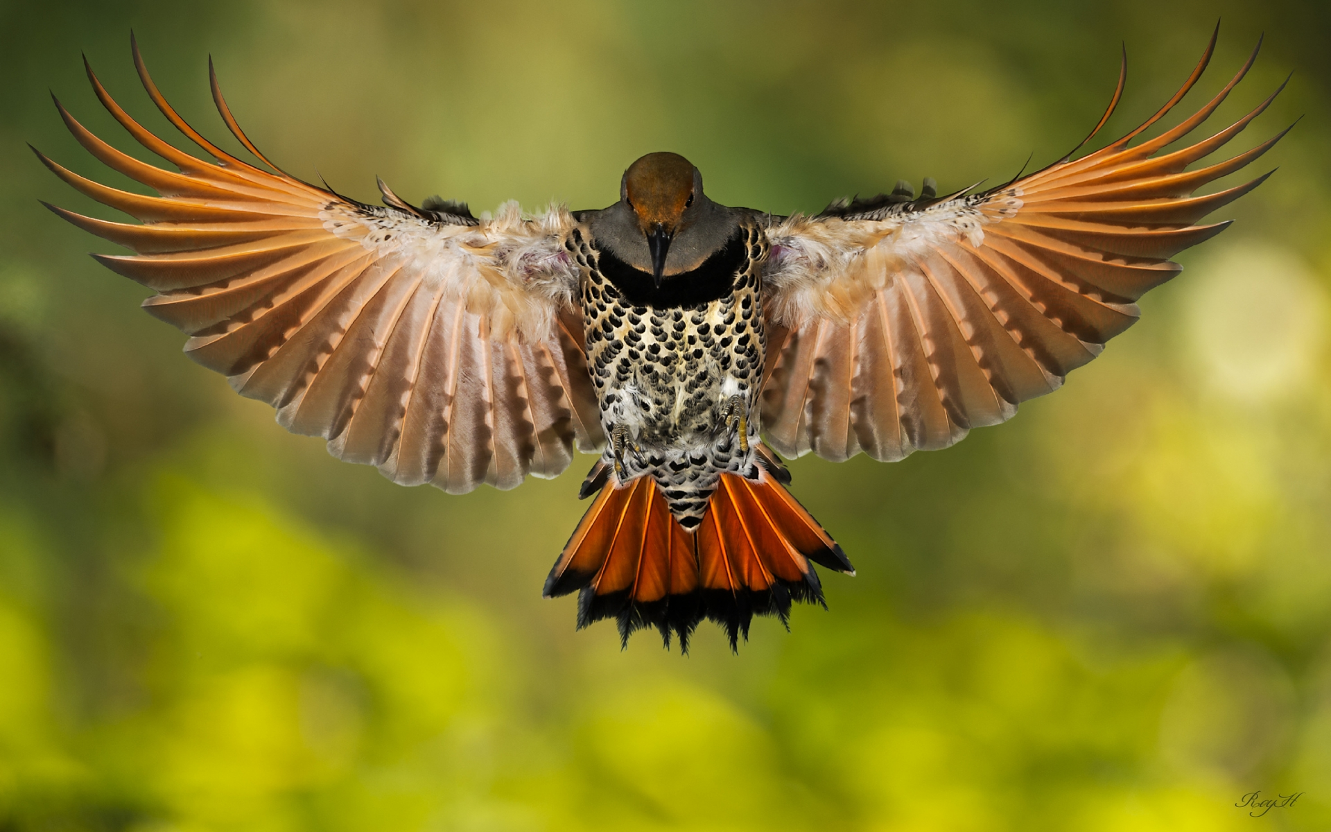 Animals birds wings feathers flight fly macro motion ...