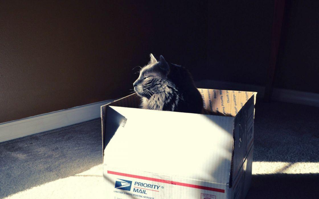animals cats felines fur whiskers humor funny sunlight wallpaper