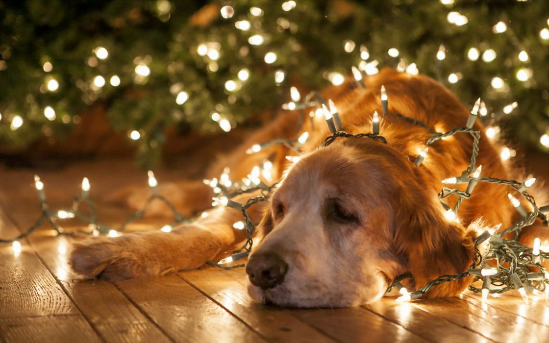 holidays christmas new year lights bright animals dogs humor funny wallpaper