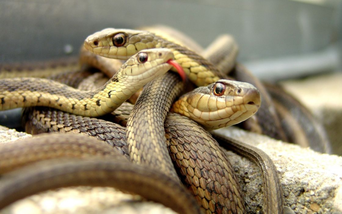 animals snakes reptiles eyes face aquarium wallpaper