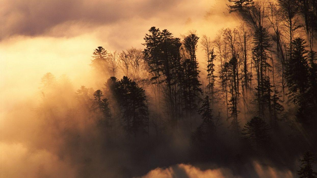 nature landscapes trees forest sunlight sunrise sunset clouds fog mist wallpaper