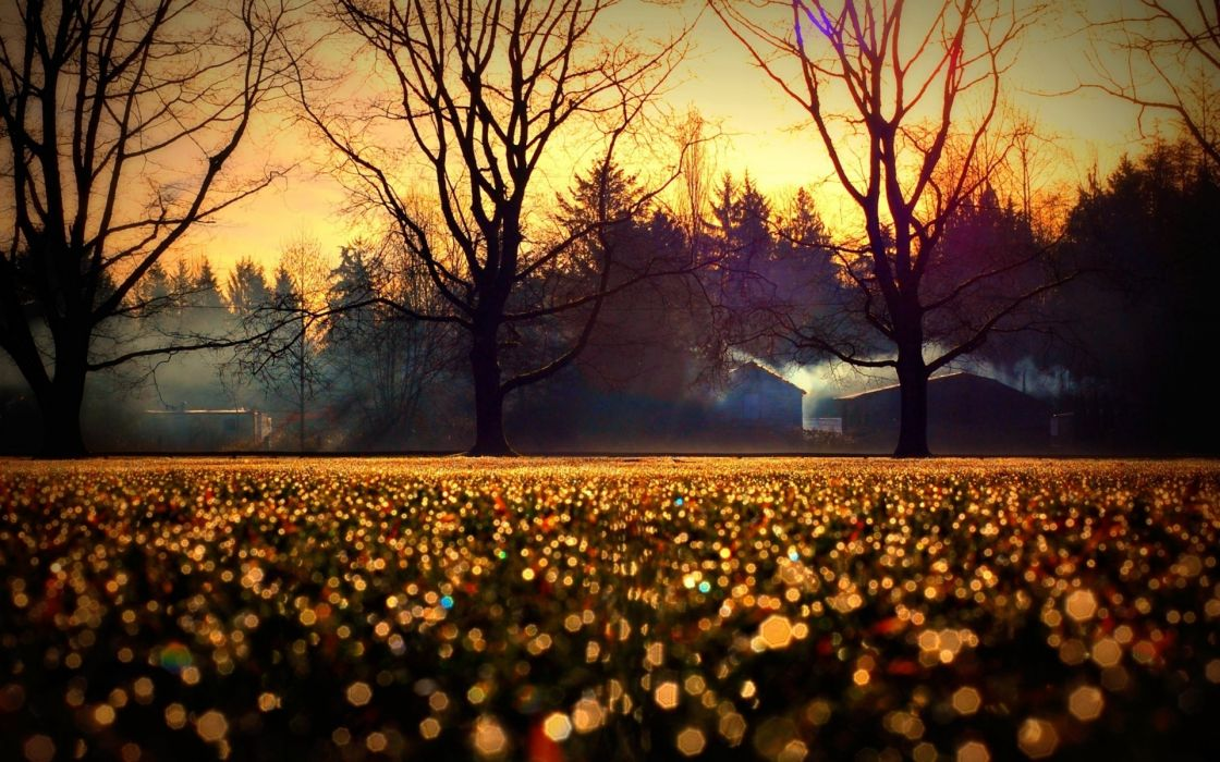 nature fields grass wet drops trees architecture buildings houses sunrise sunset sky morning smoke wallpaper