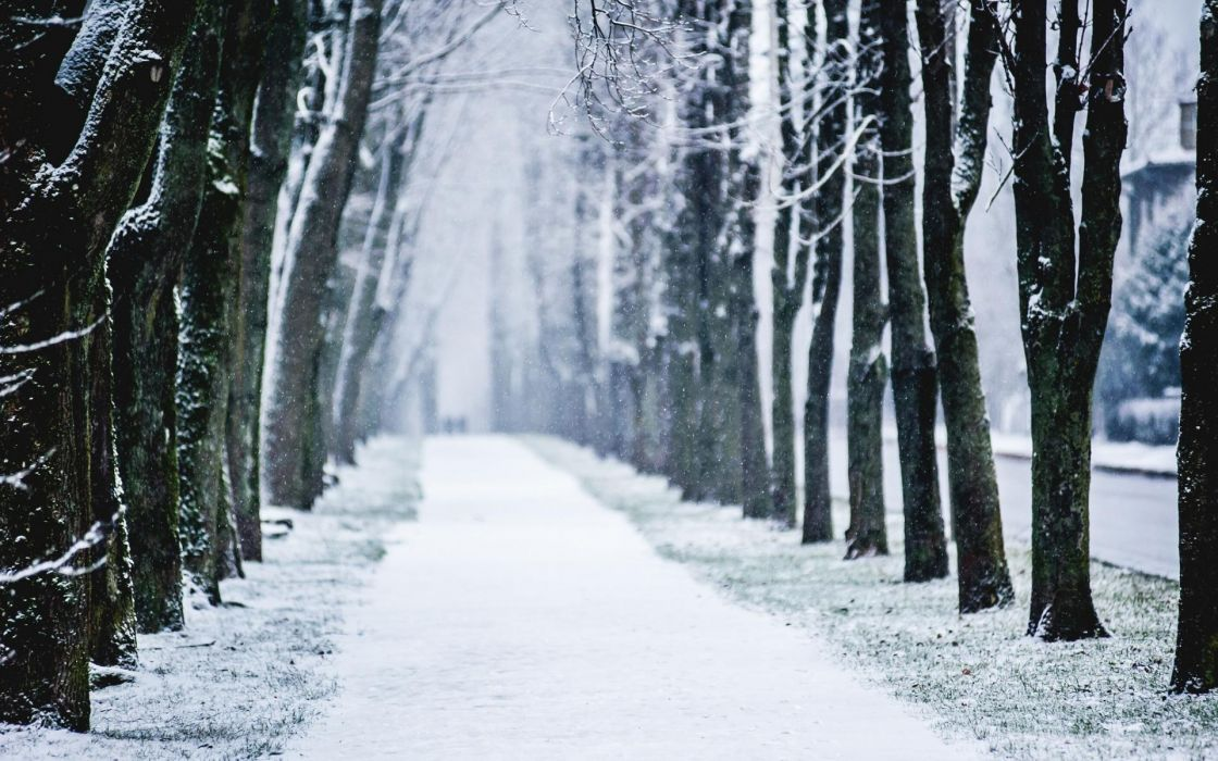 nature landscape roads path sidewalk trail tracks trees lane winter snow seasons snowing flakes drops cold wallpaper